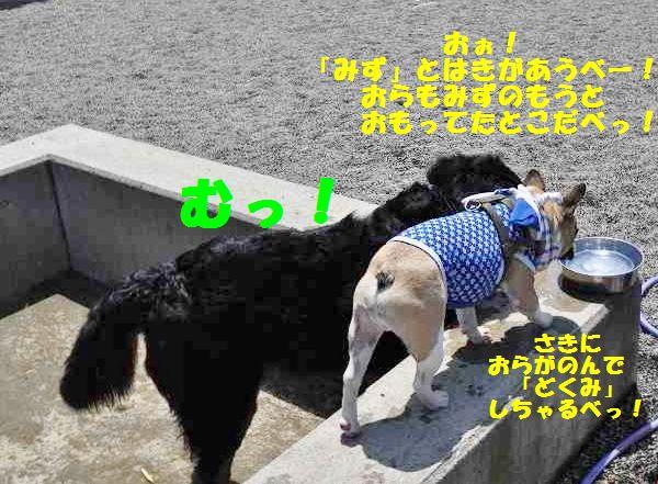 102_20140512141806861.jpg