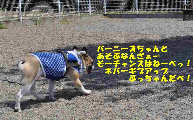 105_20140512111042ed3.jpg
