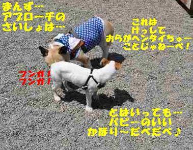 133_20140514150603414.jpg