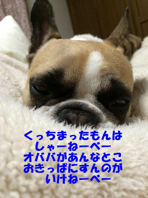 IMG_1347.jpg