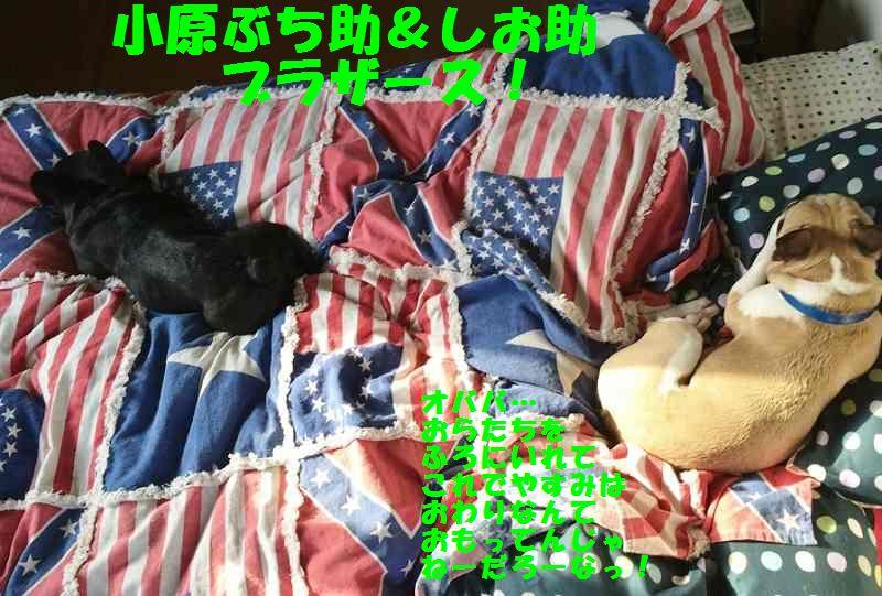 IMG_1897_20140507095304b9f.jpg