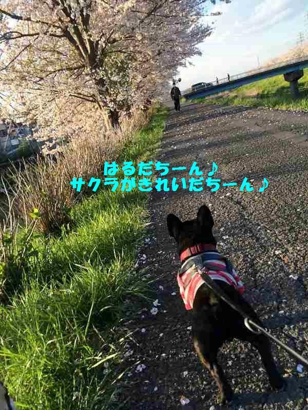IMG_3369.jpg
