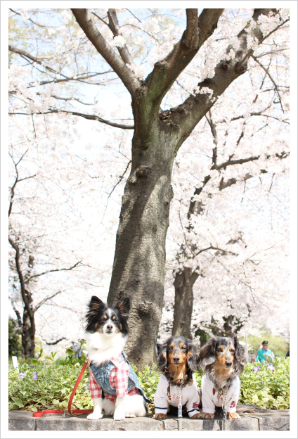 2014-04-02-04.jpg