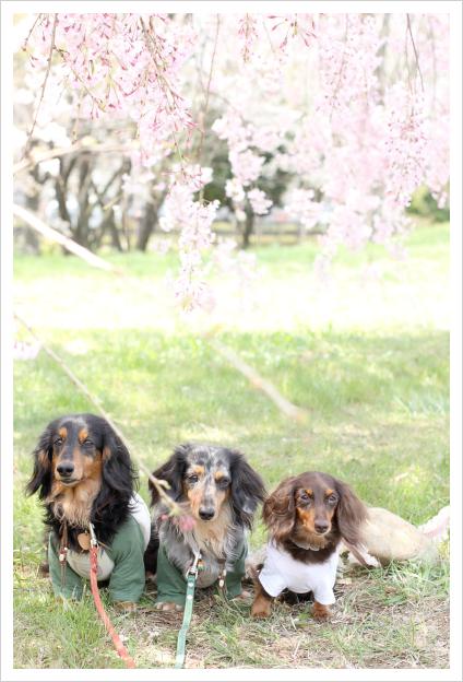 2014-04-15-07.jpg