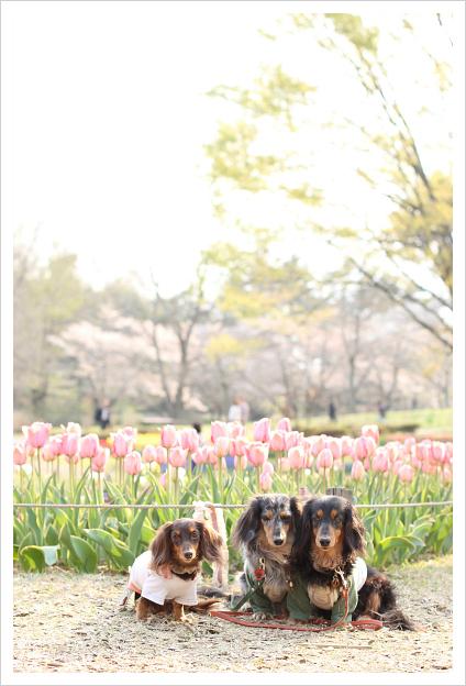 2014-04-17-13.jpg