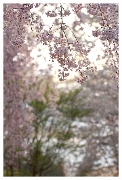 2014-04-17-23.jpg
