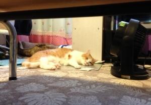 テーブルの下からこんにちわー