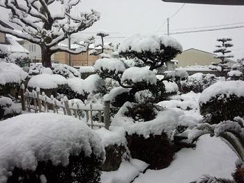 春風の庭朝4