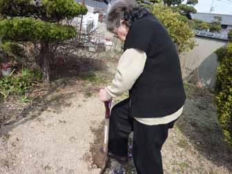 菊芋掘り1