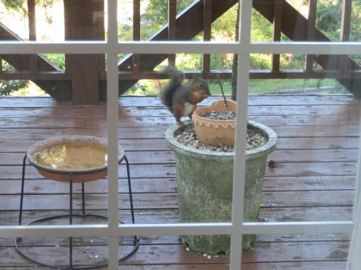 リスさんの朝食
