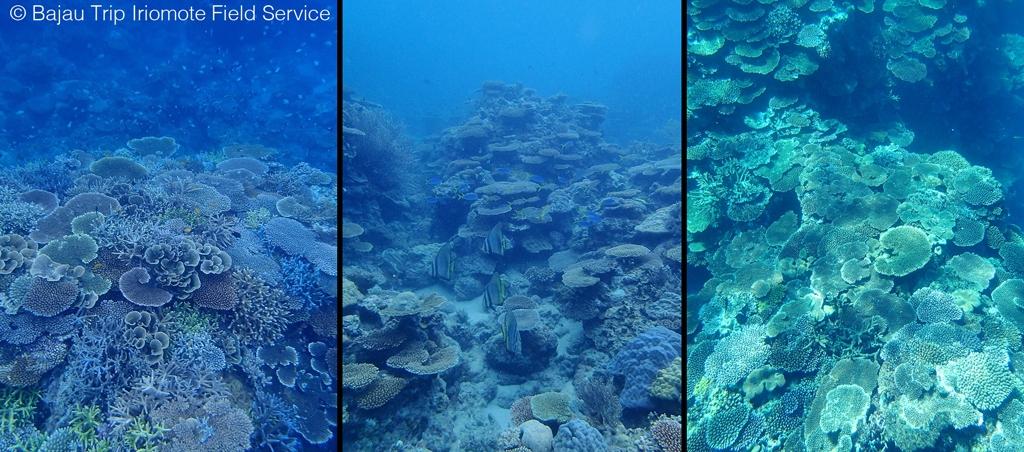 西表島・サンゴ