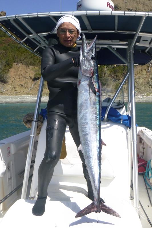 カマスサワラ 17~18kg(海笊さん)
