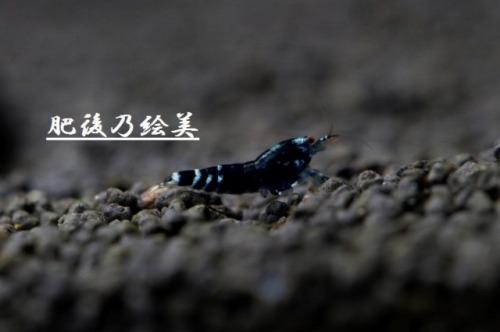 銀天龍10