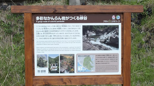 不動滝様似 (4)