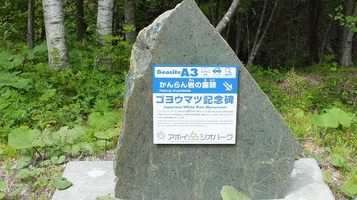 不動滝様似 (3)