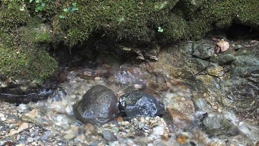 神威鍾乳洞 沢(9)水