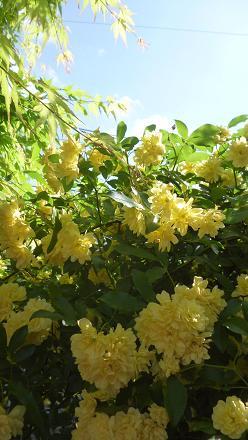 庭に咲いた花々 013