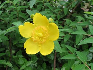 お花 002