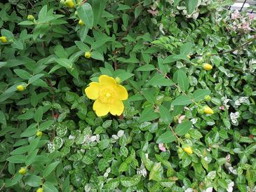 お花 004
