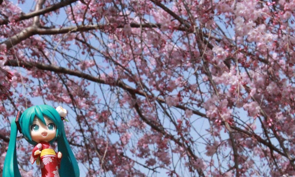 桜4-2b
