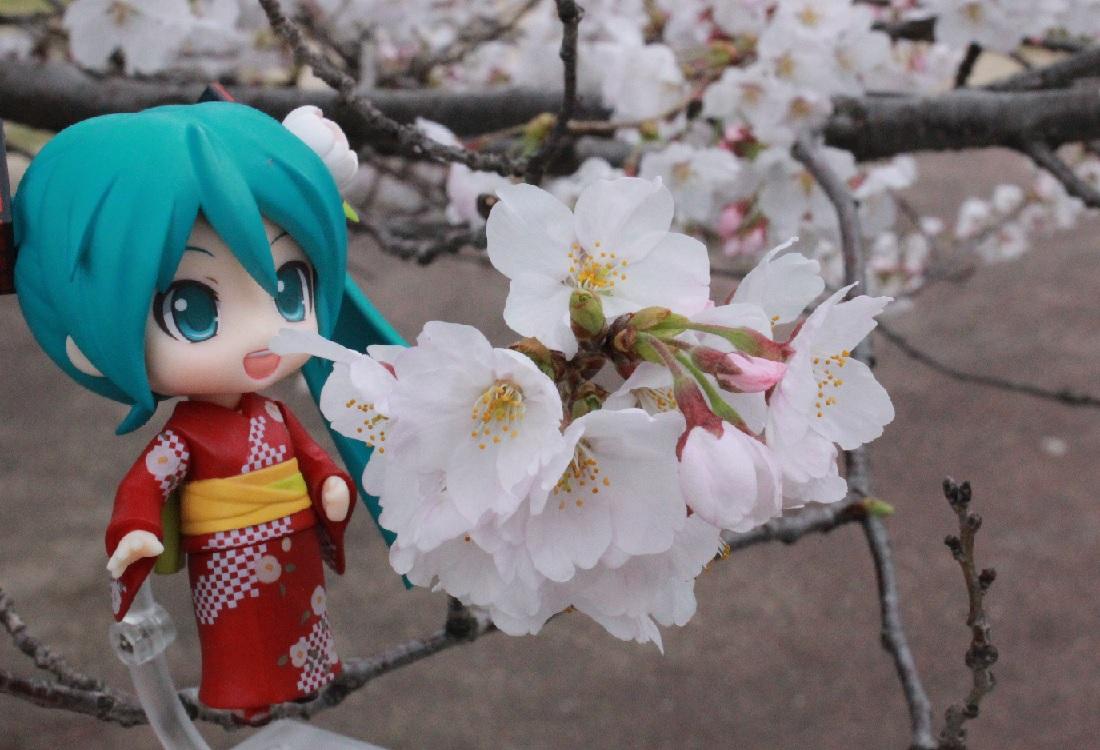 ミクと桜3-29