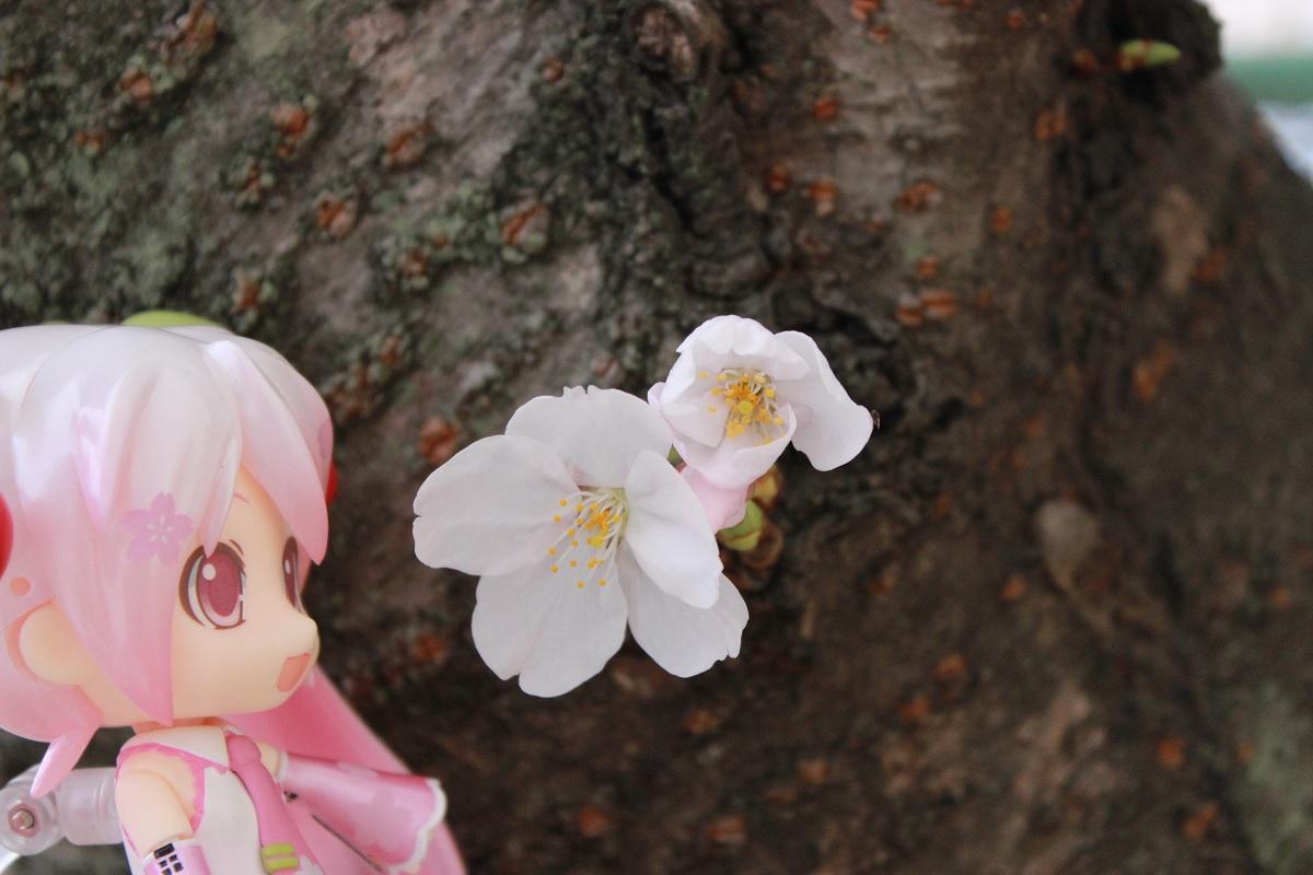桜ミク3-29a