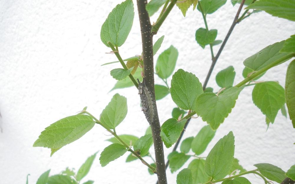 幼虫4-21c