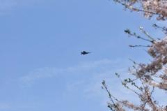 Hyakuri AB_F-15J_304