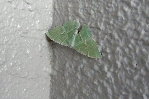 神戸・昼から散歩 昆虫