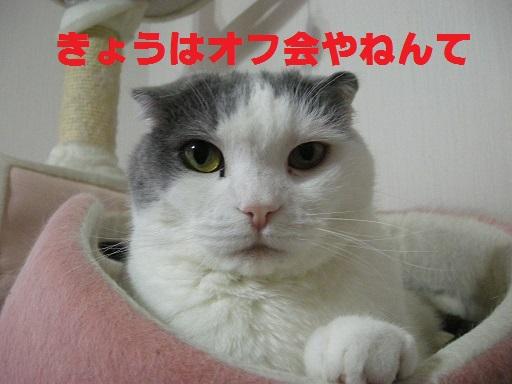 DSCN8591.jpg