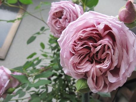 ローブ開花(2014)10