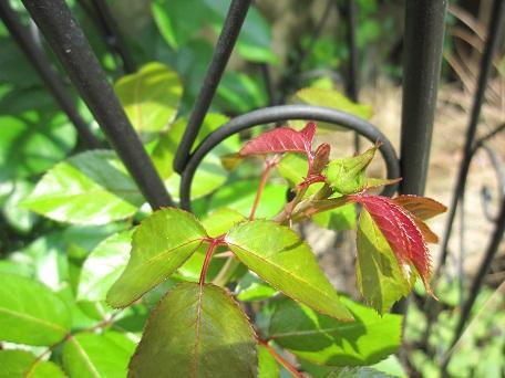 リパ2番花