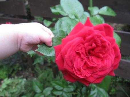 地パ2番花2