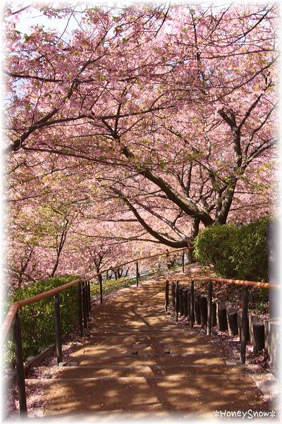 【おでかけ】 桜2014