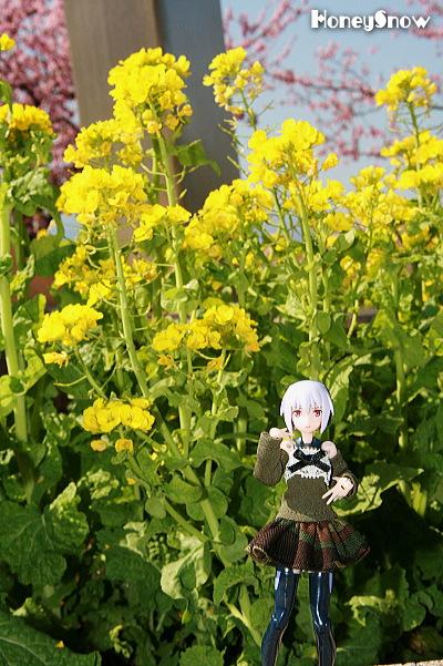 菜の花&武装神姫