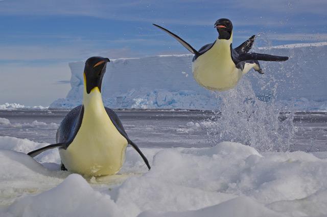 040_Paul-Nicklen-Canada-Frozen-moment.jpg