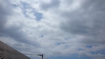 20140816pica.jpg