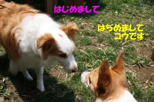 013_new