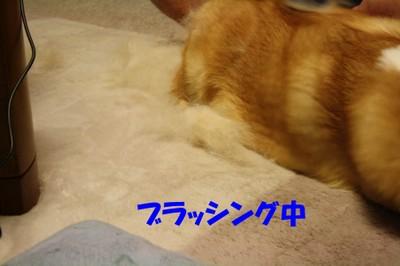 005_new