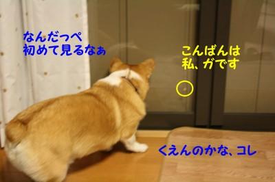 426_new