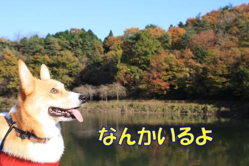 036_new