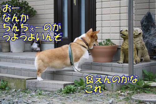 041_new