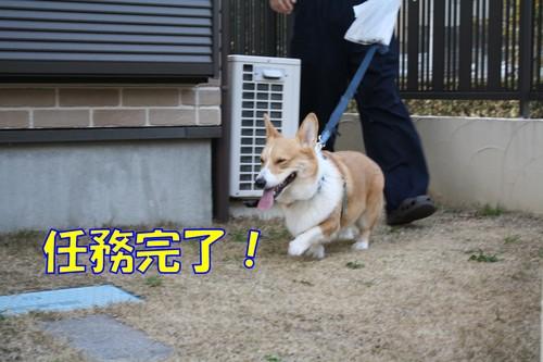 133_new