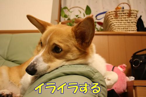 017_new
