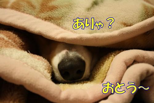 026_new_2