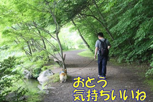 411_new