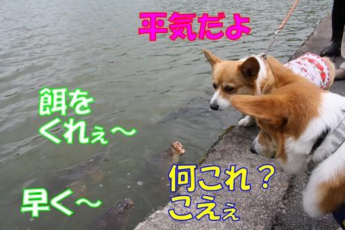 437_new