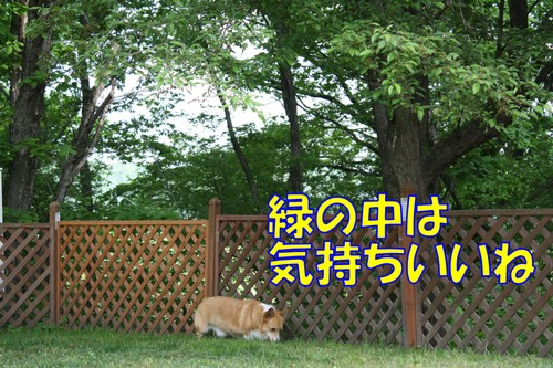 242_new