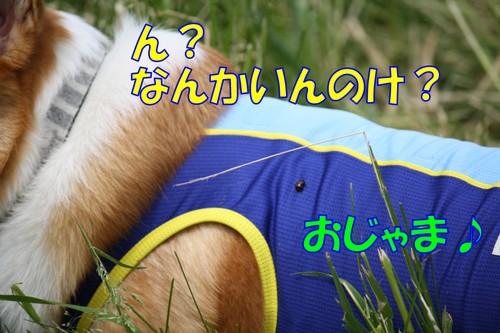 351_new