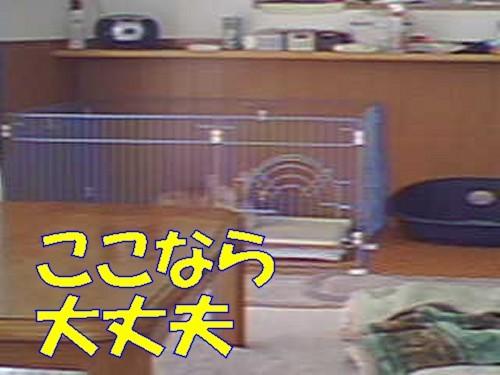 020_new